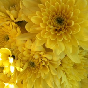 Yellow flowers for you! Kisses! Carla