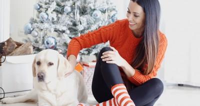 Carla Gozzi dog at Christmas